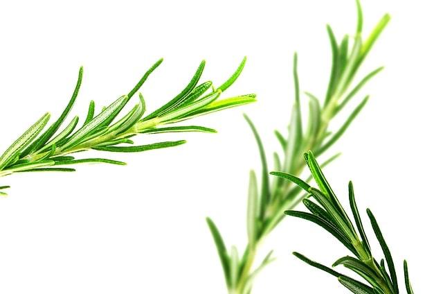 huile de romarin anti douleur relaxant anti oxydant