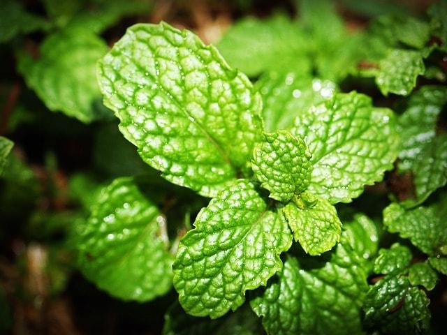 menthol anti inflammatoire fraicheur relaxant musculaire